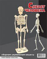 """Сборная деревянная модель """"Скелет человека"""""""