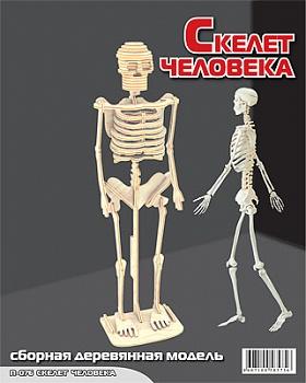 """Сборная деревянная модель """"Скелет человека"""" (МДИ П076)"""